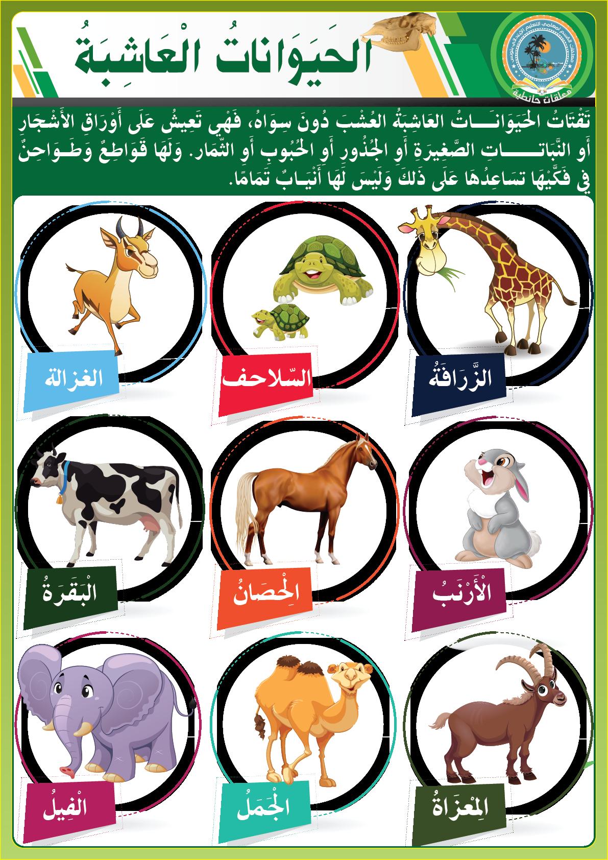 الحيوانات العاشبة Learning Arabic Arabic Language Learn Arabic Online