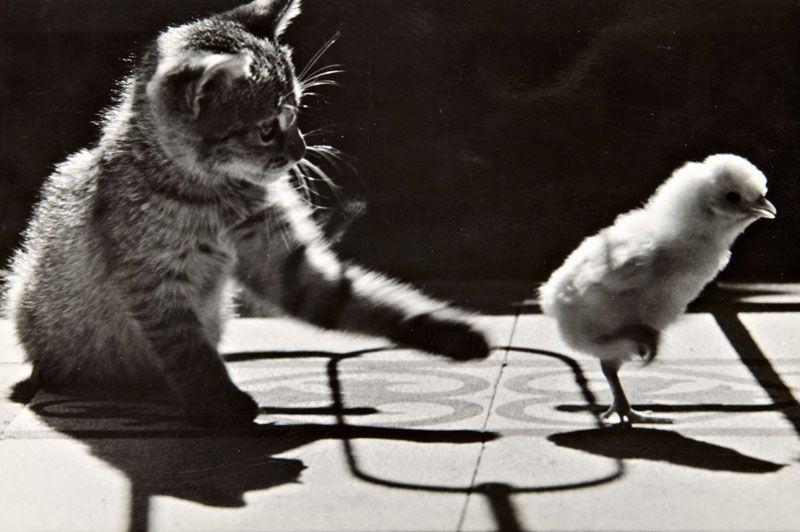 Corrupted friendship byRudolf Halász.1958. S)
