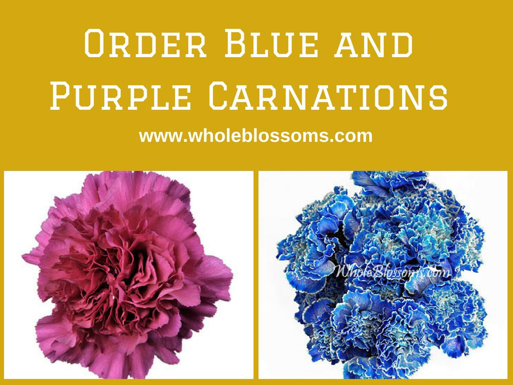 Blue carnation flower tinted whole blossoms pinterest blue blue and purple carnations are the beautiful variety that gives gorgeous look when they are used in flower bouquet and other floral arrangements izmirmasajfo