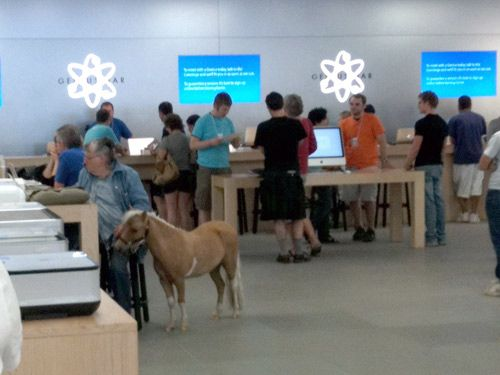 Miniature Horse in the Apple Store