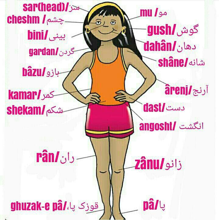 An Arm And A Leg Idiom Meaning In Urdu Body Farsi Persian Language Learn Persian Learn Farsi