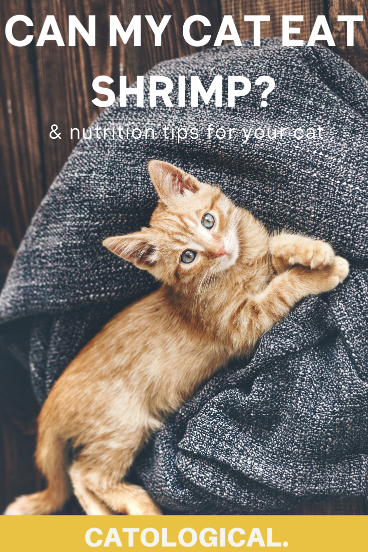 Can Cats Eat Shrimp Or Are They Bad For Them In 2020 Best Cat Food Kitten Care Cat Care