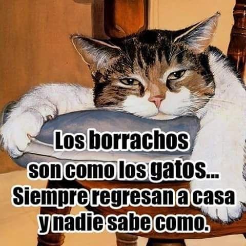 Pin By Ena Regalado On Memes Y Otras Cosas Que Dan Risa Humor Make Me Laugh Cats