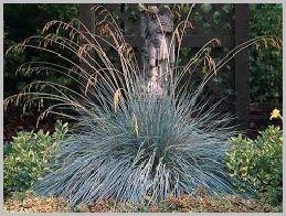 Ornamental grasses landscaping pinterest grasses houseplants ornamental grasses workwithnaturefo