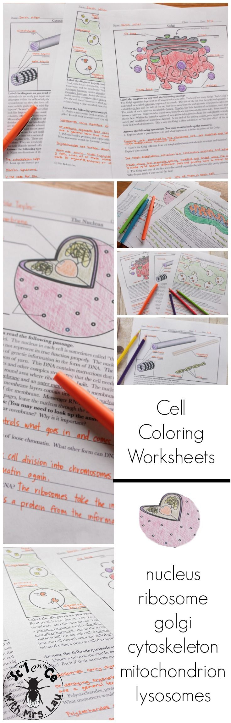 cell and organelle coloring page and diagram unit bundle group