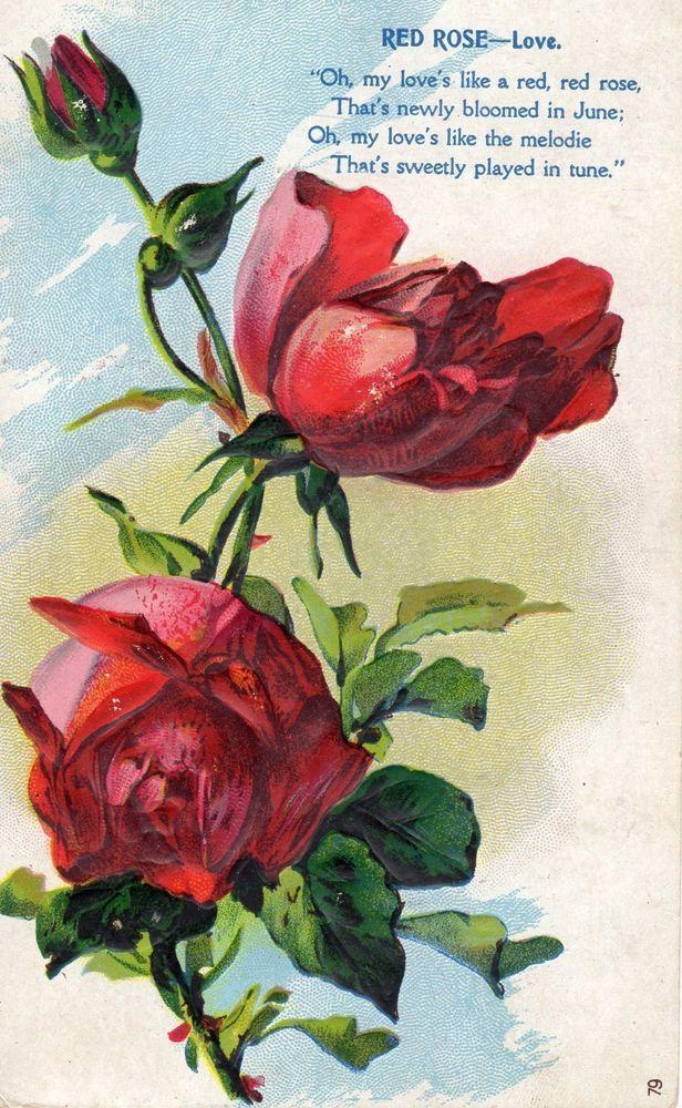 red roses poem that red rose means love embossed vintage postcard