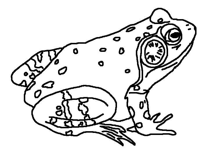 Bull Frog Landscape Frog Coloring Pages Butterfly Coloring