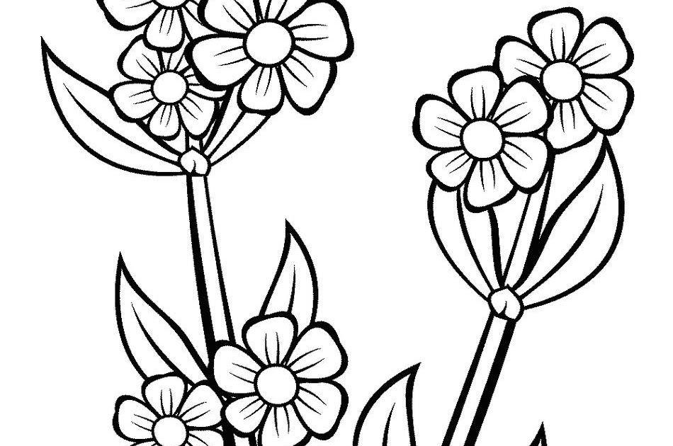 Gambar Bunga Matahari Hitam Putih Untuk Diwarnai Di 2020 Bunga