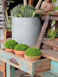 Pin Van Renee Op Jardins Tuin Decoratie Tuin Planten