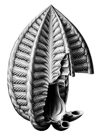 Ученые восстановили истинный облик таинственного вендобионта