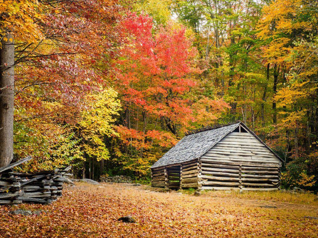Fall Foliage Great Smoky Mountain National Park Tennessee Great Smoky Mountains National Park National Parks Great Smoky Mountains
