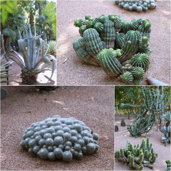 Cactus - Jardins Majorelle