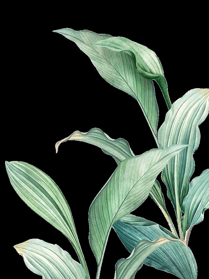 Imagen de rawpixel (Pinterest) y editada por @thayrags para ser utilizada como un sticker. #verde #green #nature #naturaleza #planta #plant #flor #flores #flower #tumblr #aesthetic #vintage #freetoedit