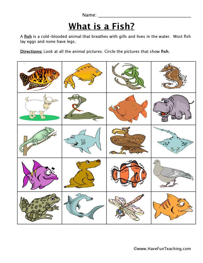 Fish Classification Worksheet Have Fun Teaching Animal Classification Worksheet Animal Worksheets Have Fun Teaching