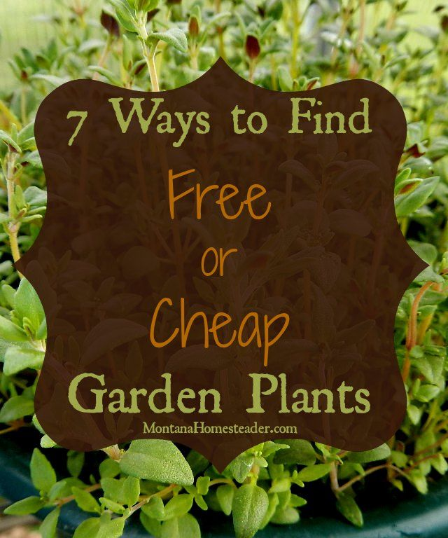 Cheap Ways To Do Your Garden: 7 Ways To Find Free Or Cheap Garden Plants
