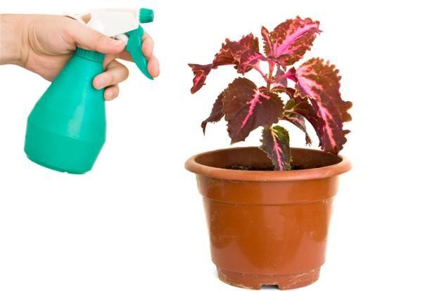 Blog O Kwiatach I Florystyce Slubnej Domowe Sposoby Na Kwiaty Doniczkowe Planter Pots Planters Garden