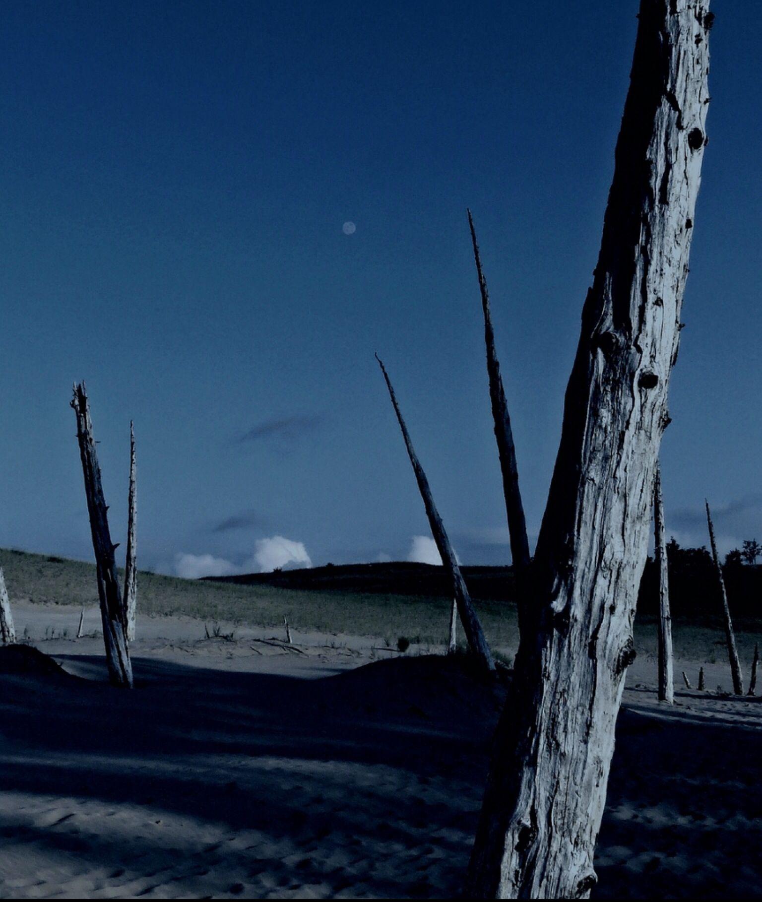 Ghost Forest at Sleeping Bear Dunes | Marvelous Michigan | Lunar