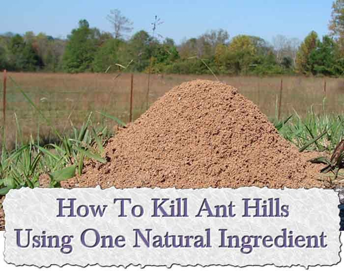 Superior How To Kill Ant Hills Using One Natural Ingredient Amazing Ideas