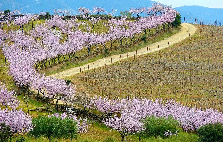 Durante os meses de Fevereiro e Março as amendoeiras em flor proporcionam um espectáculo de cores que se estende pelos vales do Douro.