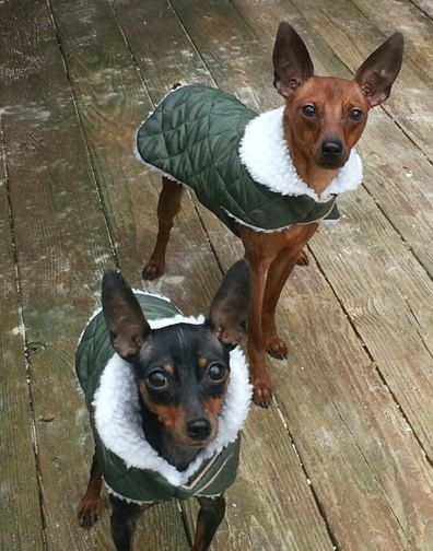 Waterproof Dog Flight Jacket by CustomDogJacket on Etsy