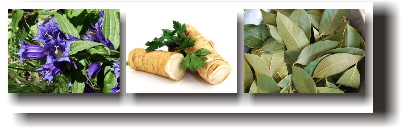 preparate din plante varicoză)