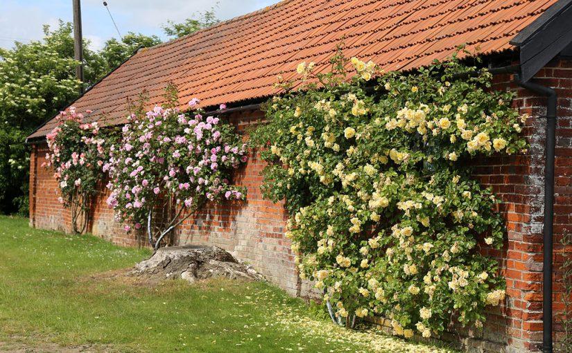 Backyard Climbing Structures | JanielinSmith | Backyard ...