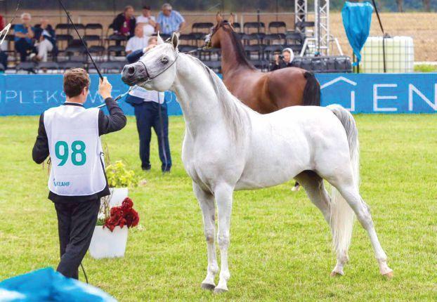 في حضور خالد بن سلطان بولندا تشهد بطولة الخالدية الأوربي لجمال الخيل Arabian Horse Horses Beautiful Gorgeous