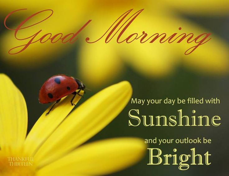 Good Morning Quotes Good Morning May Your Day Be Filled With