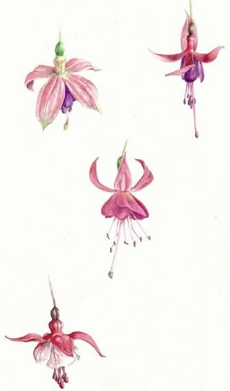 Watercolor Flowers And Paint Brushes: Watercolour Dry-Brush Technique For Botanical Paintings