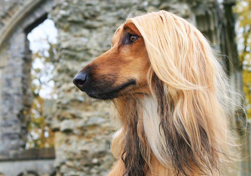 джей собаки с длинными мордами картинки всего мира