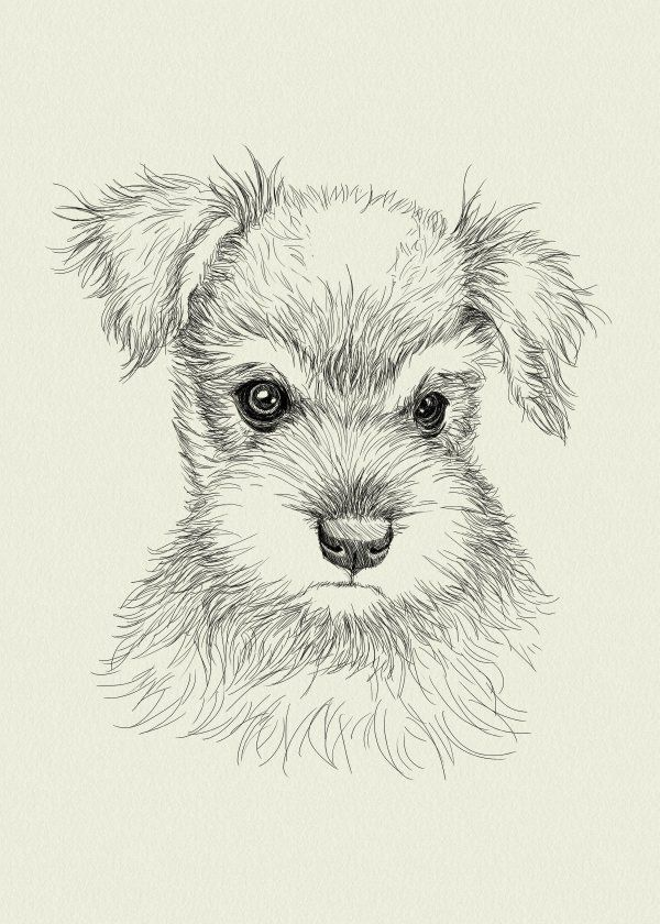 Schnauzer Poster Print By Det Tidkun Displate In 2020 Schnauzer Art Animal Drawings Cute Animal Drawings