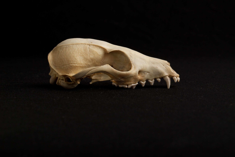 Image © Josh Franzos / Carnegie Museum of Natural History.