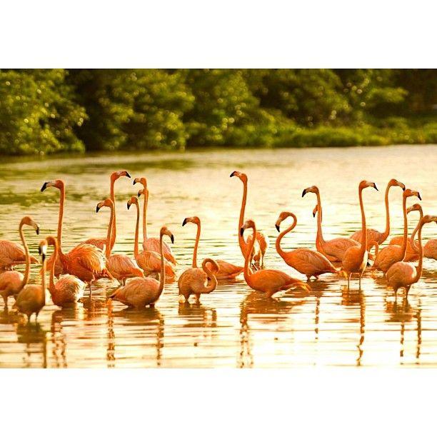 pink flamingos <3
