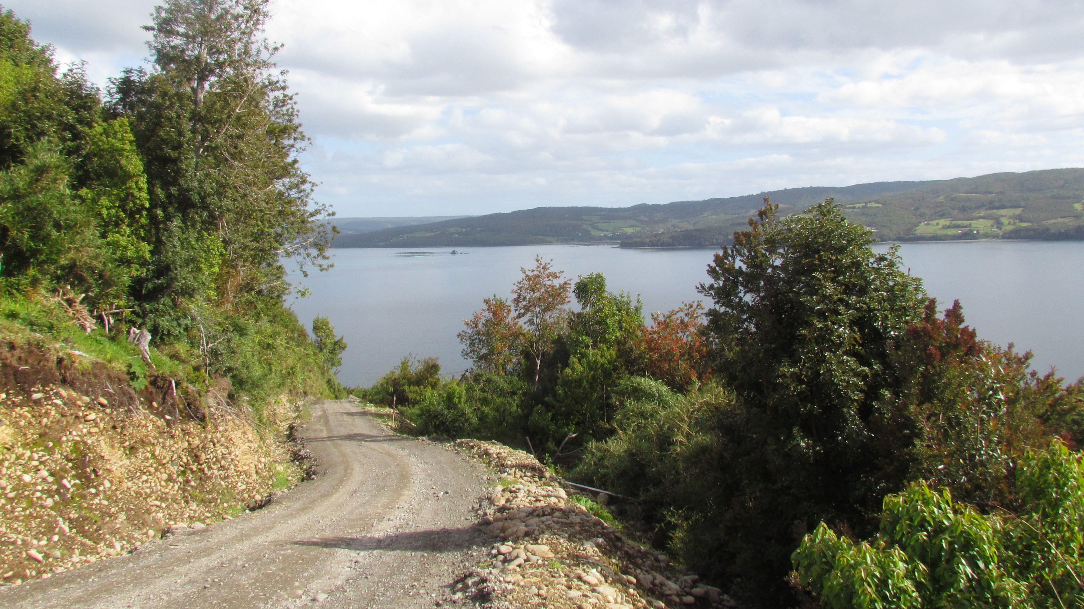 Camino En Paildad Bosque Nativo Cabanas Bosque