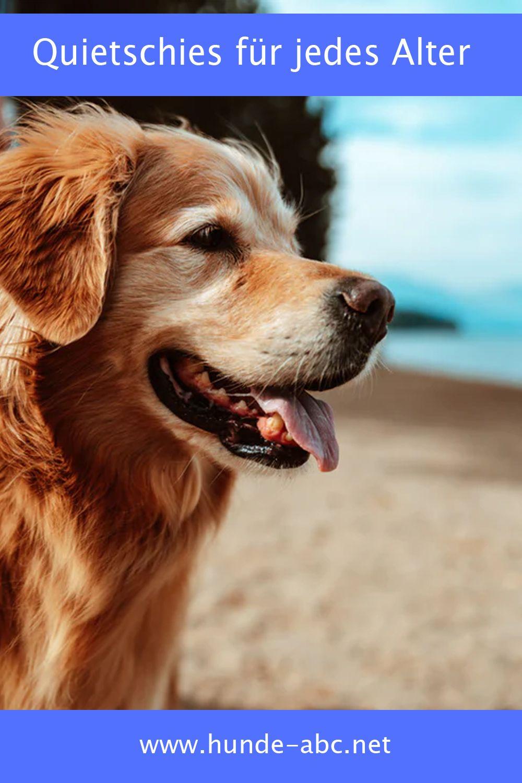 Quietschies Fur Jedes Alter In 2020 Golden Retriever Hund Und Katze Schone Hunde