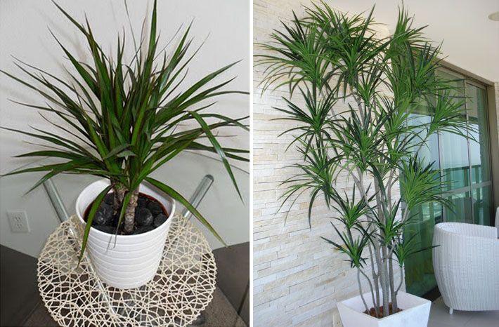 Tipos de plantas para cultivar dentro de casa plants and - Clases de plantas de interior ...