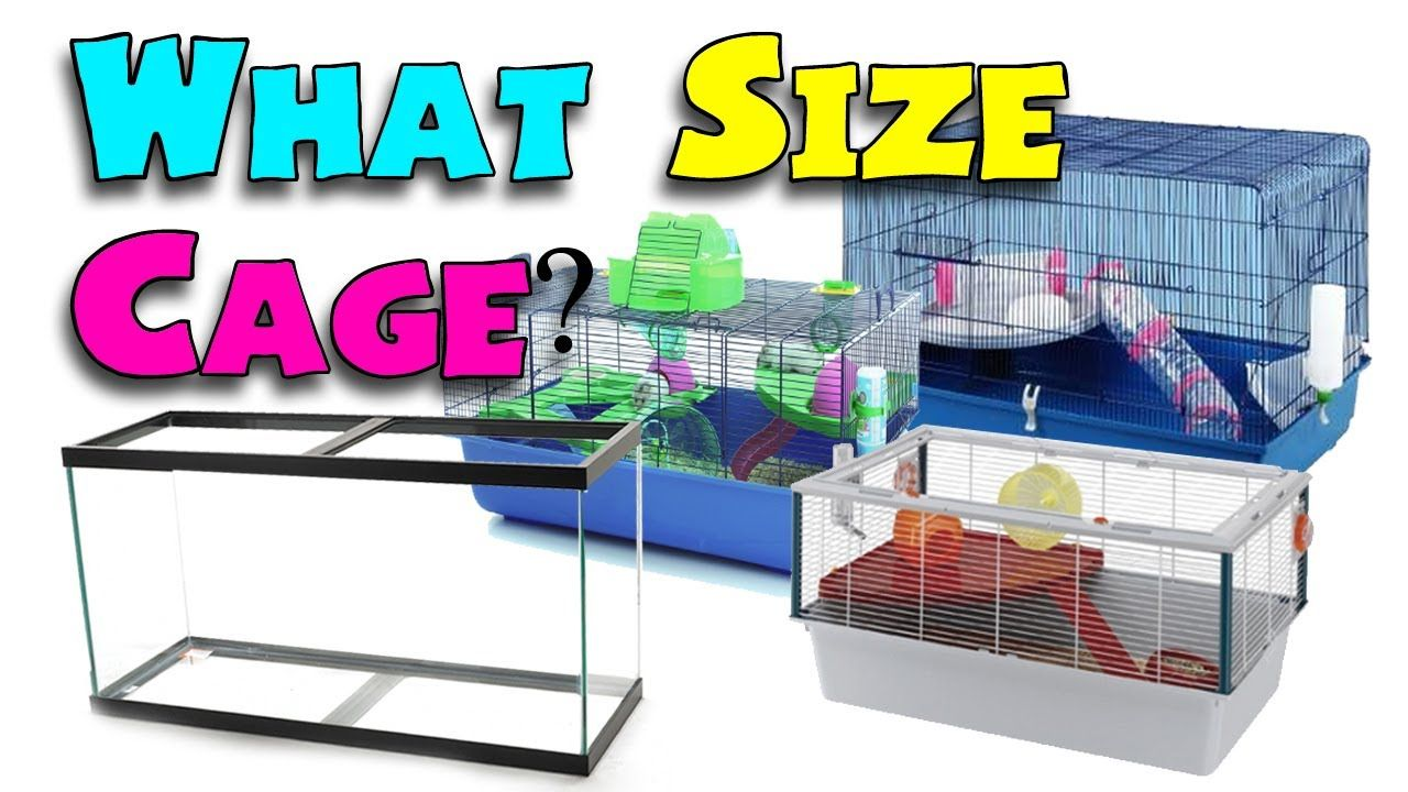 What Size Cage Minimum Hamster Cage Sizes Hamster Cage Hamster Cage