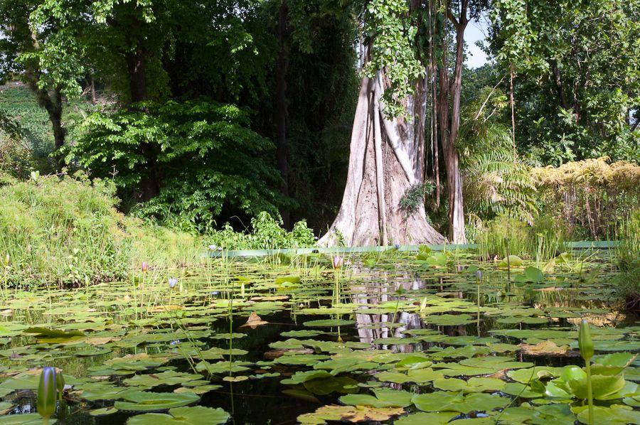 The Official Botanic Garden Of Rutgers: Lovely Botantical Garden Scene In St Vincent And The