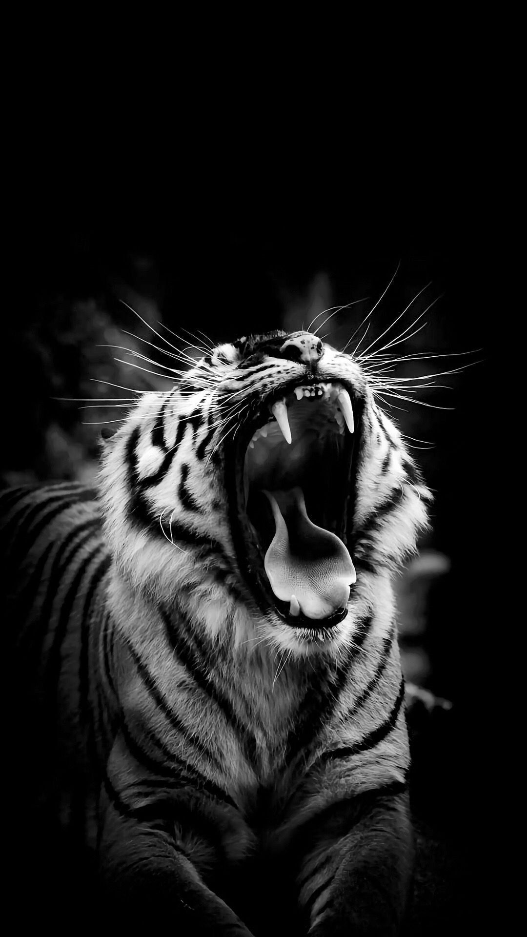 Black And White Tiger Image On High Resolution Wallpaper On Floral Wallpaper Black And White Ti Tiger Images Tiger Photography Wild Animal Wallpaper