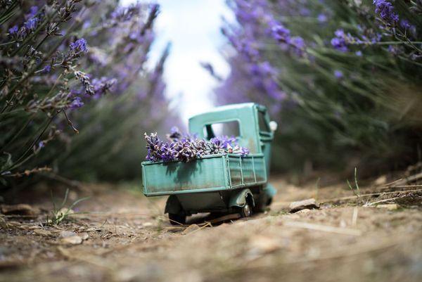 Mit kleinen Autos um die große Welt - Tolle Fotos von Kim Leuenberger