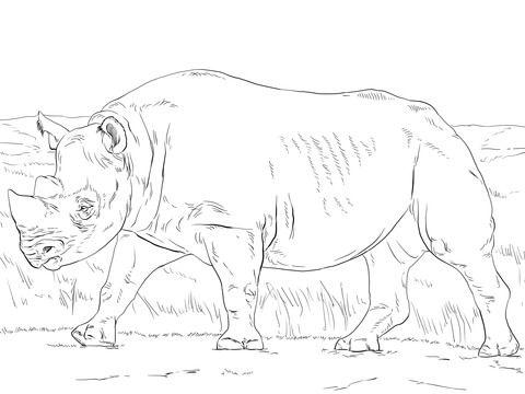 Rinoceronte Negro Dibujo para colorear | animales | Pinterest ...
