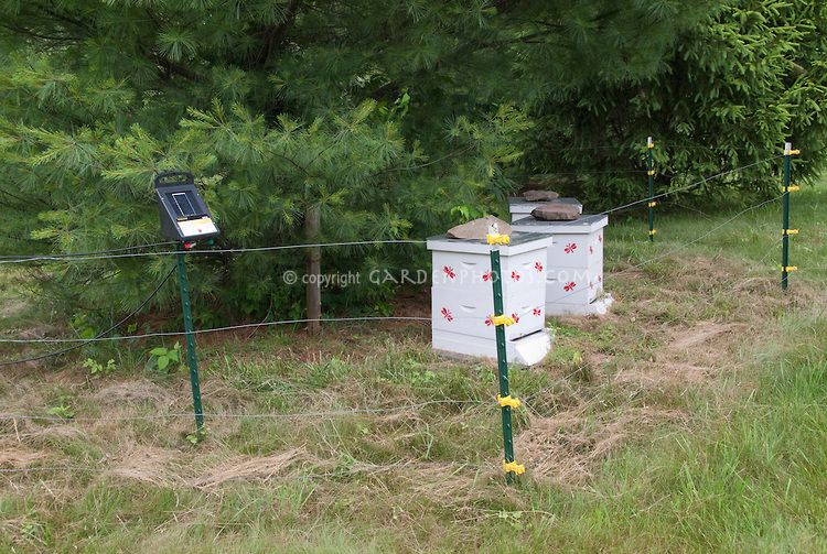 Beekeeping Protecting Beehives From Bears And Animals Behind Electric  Fencing