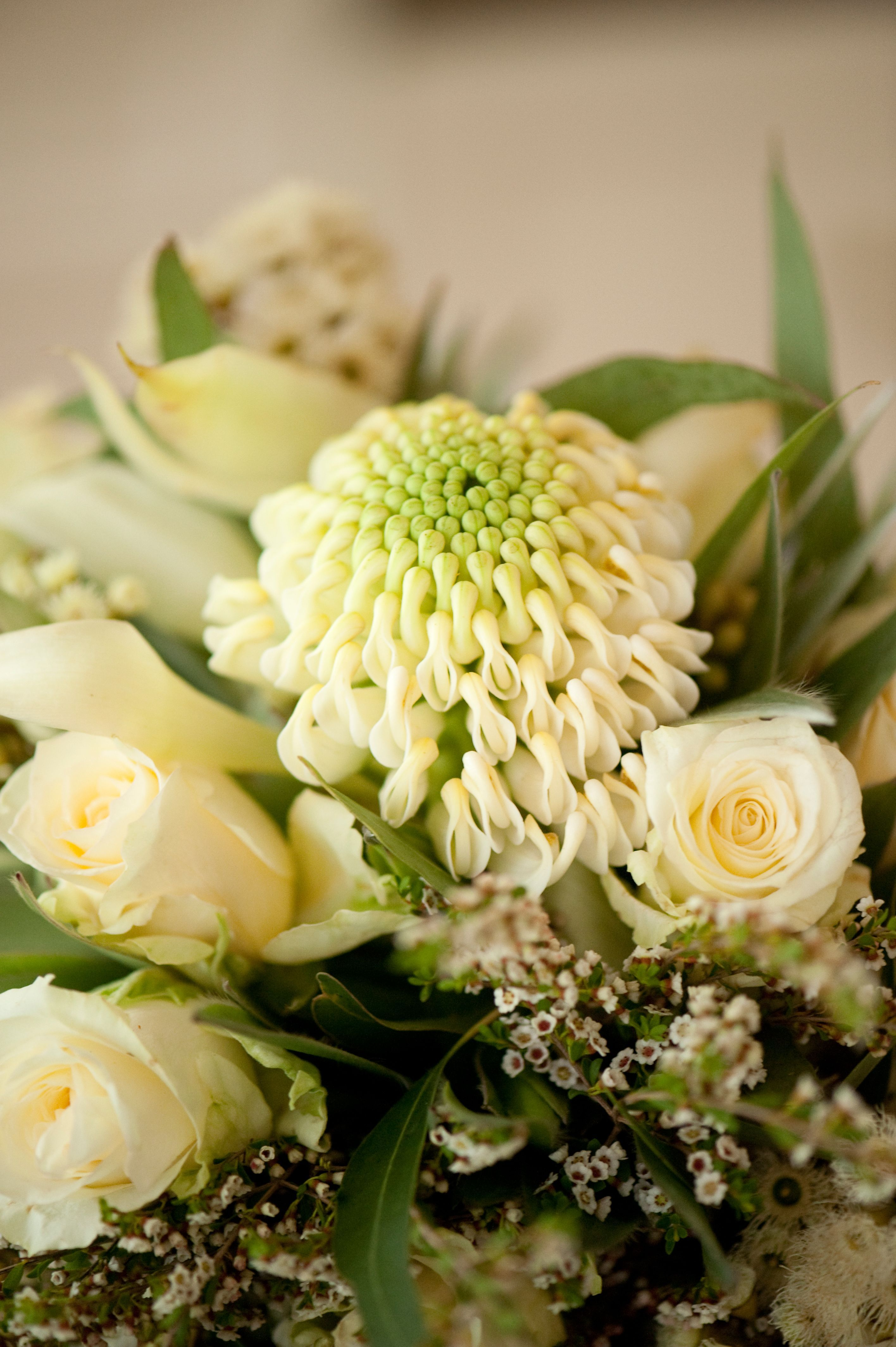 Native bouquet with a centrepiece of white waratah