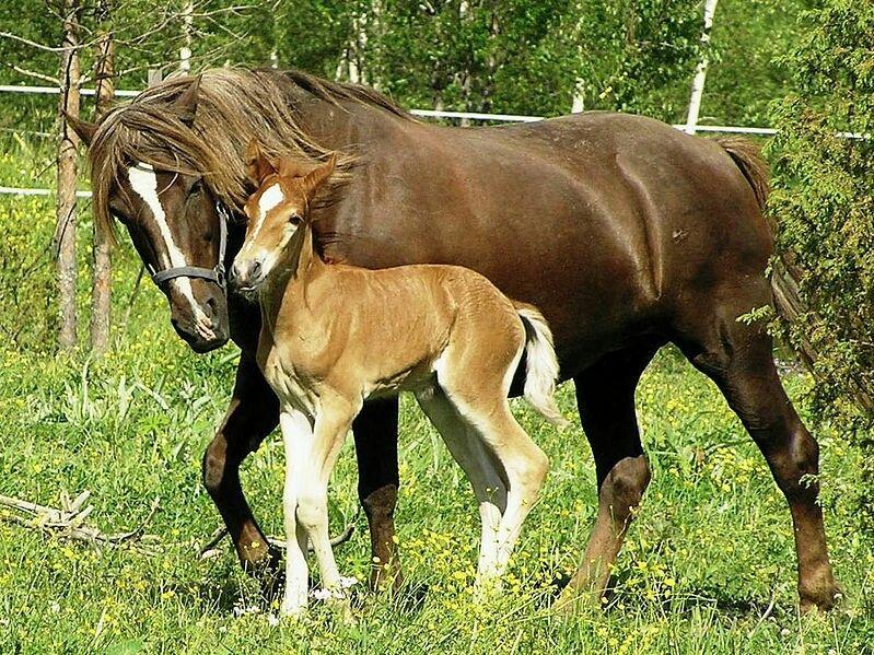 Pin By Tashamanley On Horses