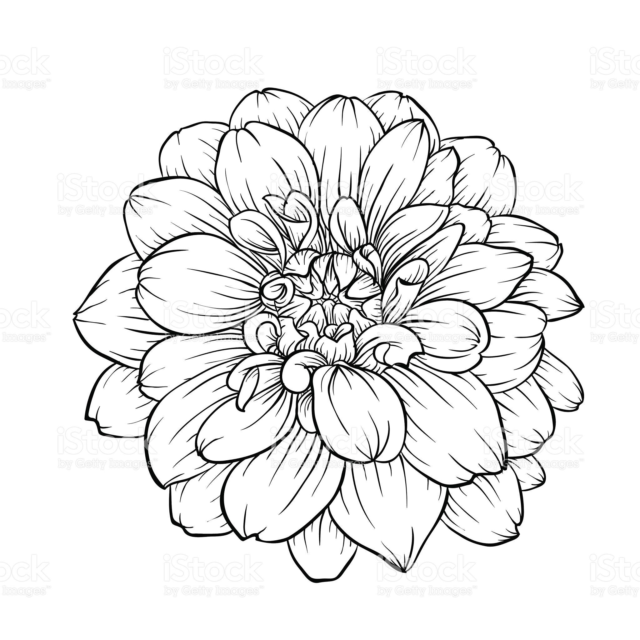 Flower Line Art Images: Beautiful Monochrome Black And White Dahlia Flower