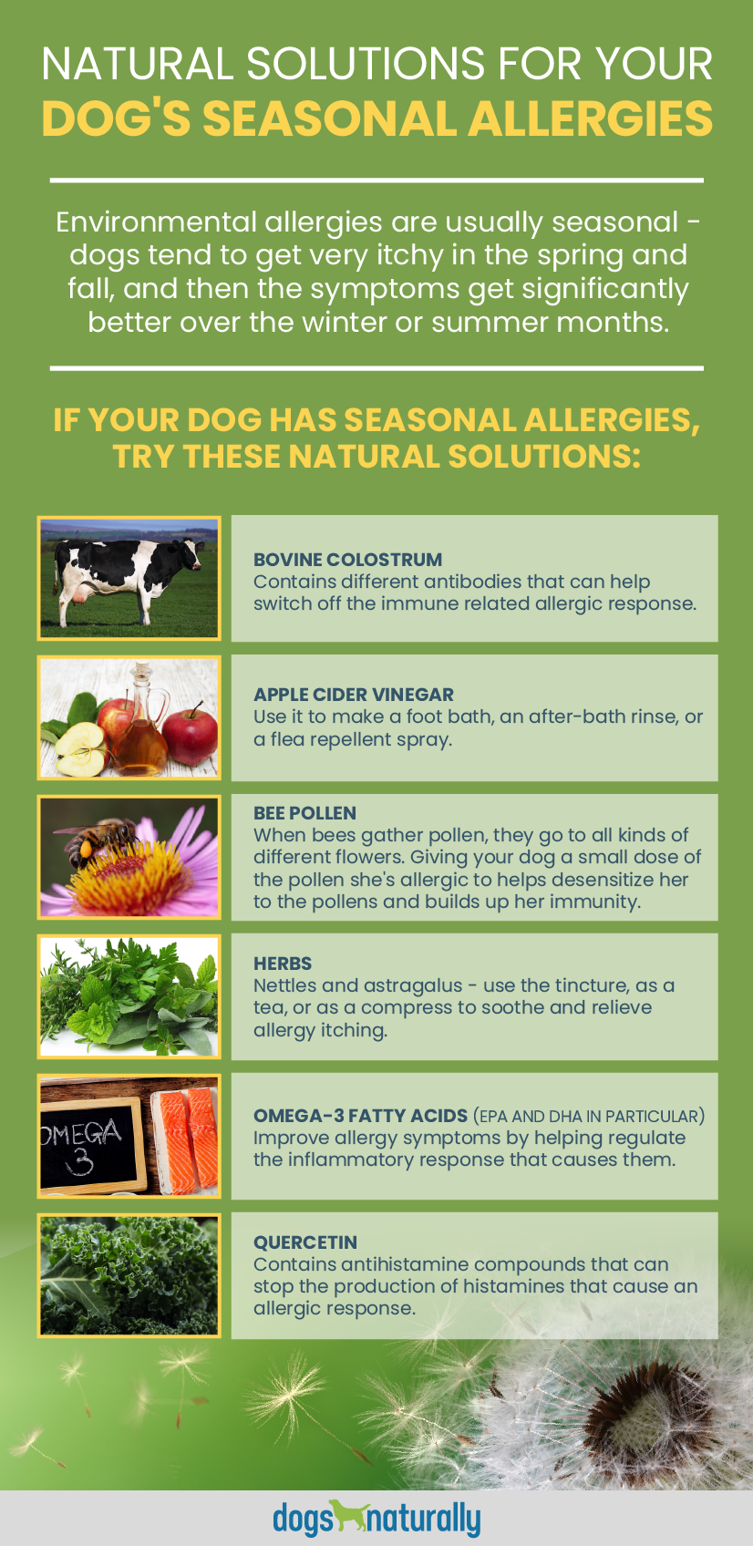 6 Natural Solutions For Environmental Allergies In Dogs Dogs Naturally Dog Allergies Remedies Dog Allergies Dog Remedies