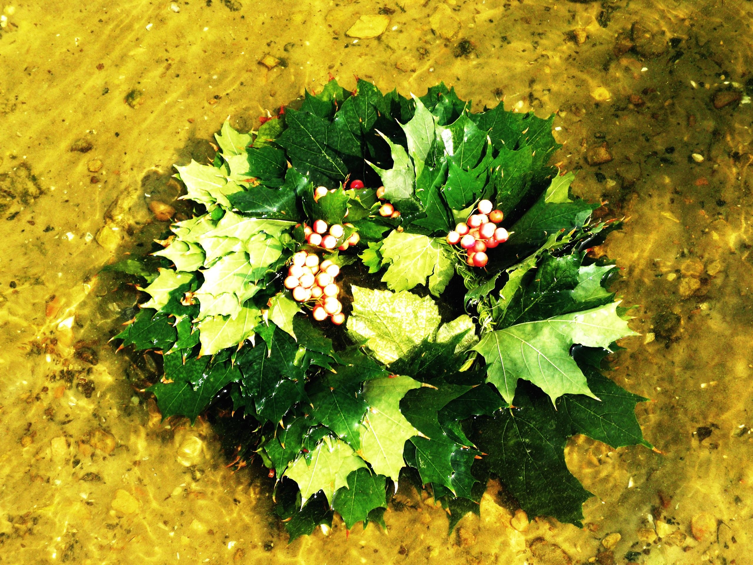 Leaf wreath on the water surface
