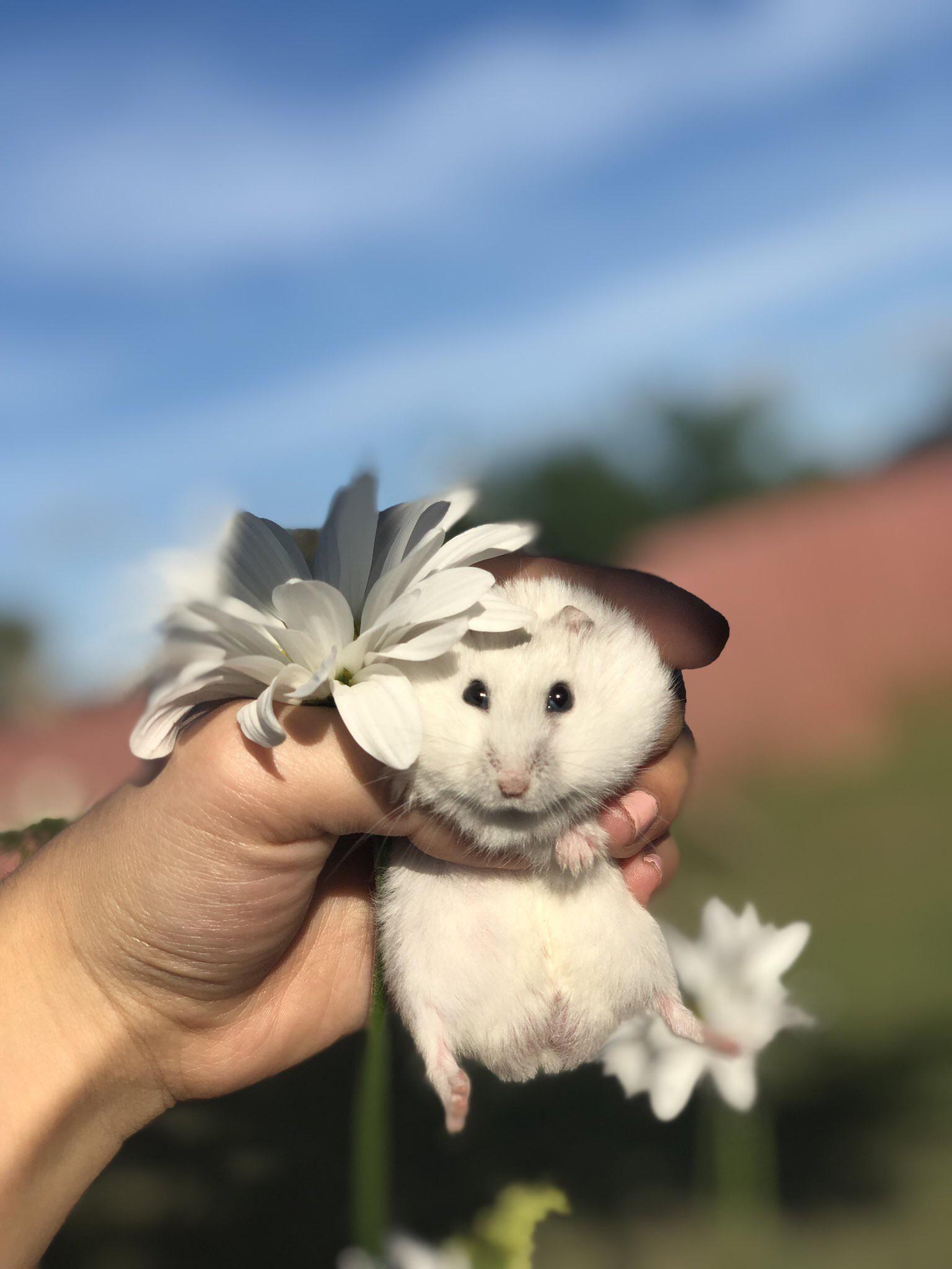 Hamster Photoshoot Jo Jo Jo Music In Artist Chicago