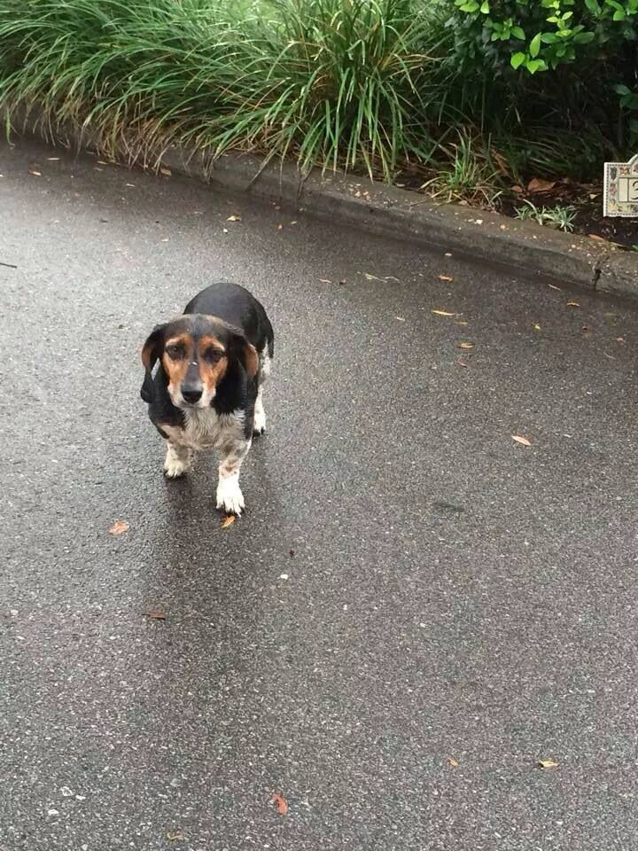 Founddog Panamacity Fl Male No Collar Scared Bunkers Cove Rd