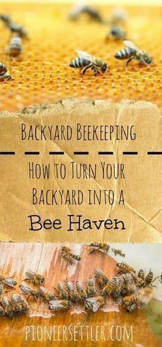 Backyard Beekeeping | How To Turn Your Backyard Into A Bee Haven  #beekeepingideas #backyardbeekeeper